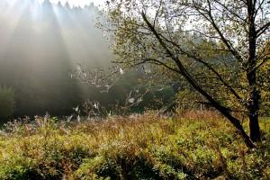 Mit geschärften Sinnen: Natur und Umwelt stehen im Fokus unserer Veranstaltungen. Foto: AGNU Braunfels