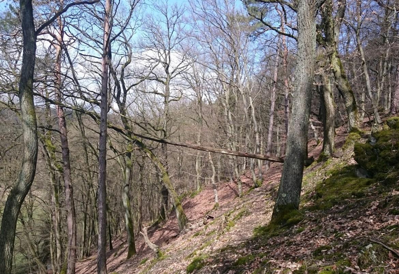 Waldnaturschutzprojekt im Heiligenwald bei Altenkirchen